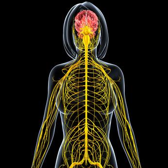Rehabilitacja neurologiczna - metafora zdjęcia systemu nerwowego kobiety
