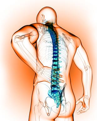 rehabilitacja kręgosłupa, model człowieka trzymającego się za tył pleców w odcinku lędźwiowym